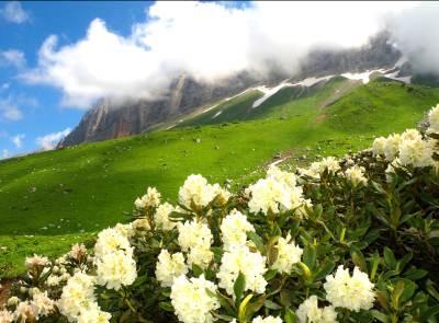 Alpijskie_luga_v_Abhazii