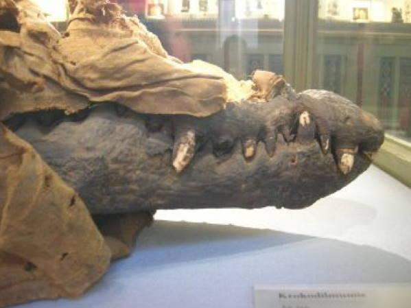 Krokodilovaja-mumija-dostizhenija-drevnego-Egipta